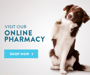Visit Online Pharmacy Button with a picture of a dog - Poole Veterinary Hospital - Pooler, GA