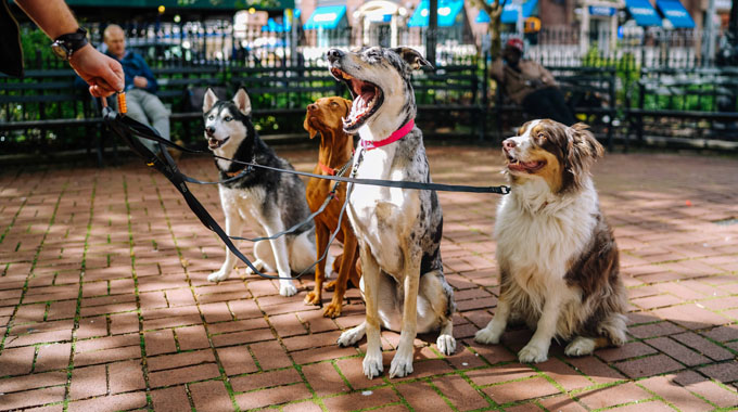 Group of Dogs on Leashes - Pooler Veterinary Hospital