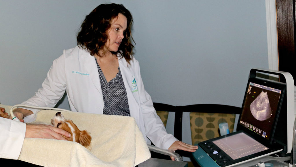 Dr. Marnie Dasher doing and ultrasound - Pooler Veterinary Hospital