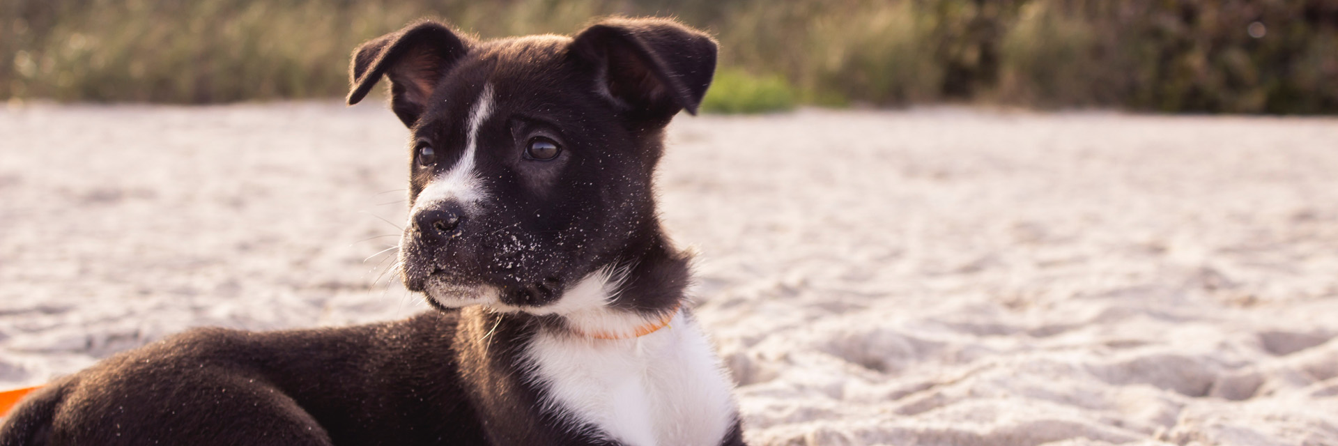 Puppy at the Beach - Pooler Veterinary Hospital