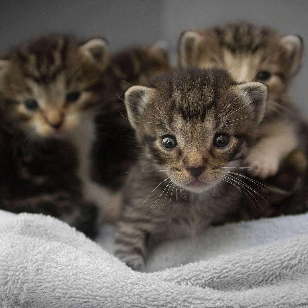 Baby Kittens - Pooler Veterinary Hospital