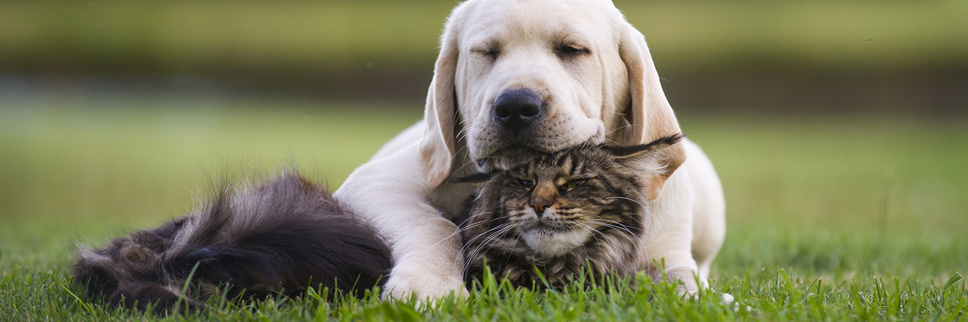 Cat and dog laying in the grass - Pooler Veterinary Hospital